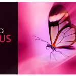 InPixio Photo Focus Pro 4.11.7584.16641 Portable [Latest]